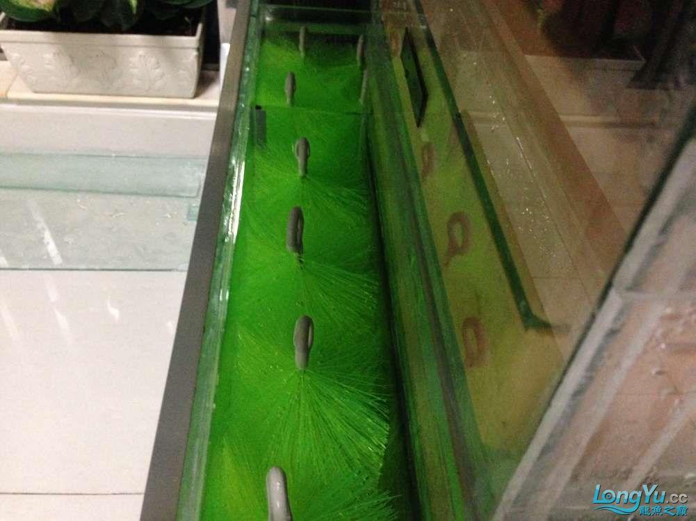 强化一下小底滤添加毛刷 北京龙鱼论坛 北京龙鱼第9张