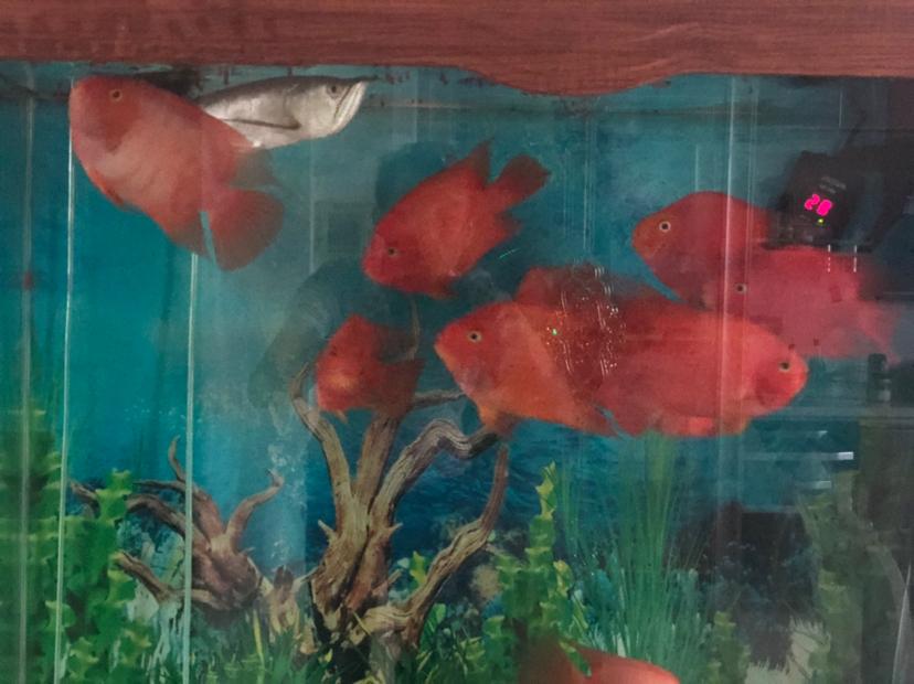 七夕获奖礼物已收到感谢大家支持 北京观赏鱼 北京龙鱼第2张