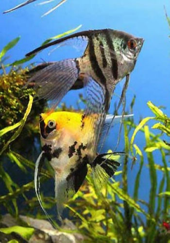 北京哪个水族店有白子黑帝王魟龙鱼换水 北京观赏鱼