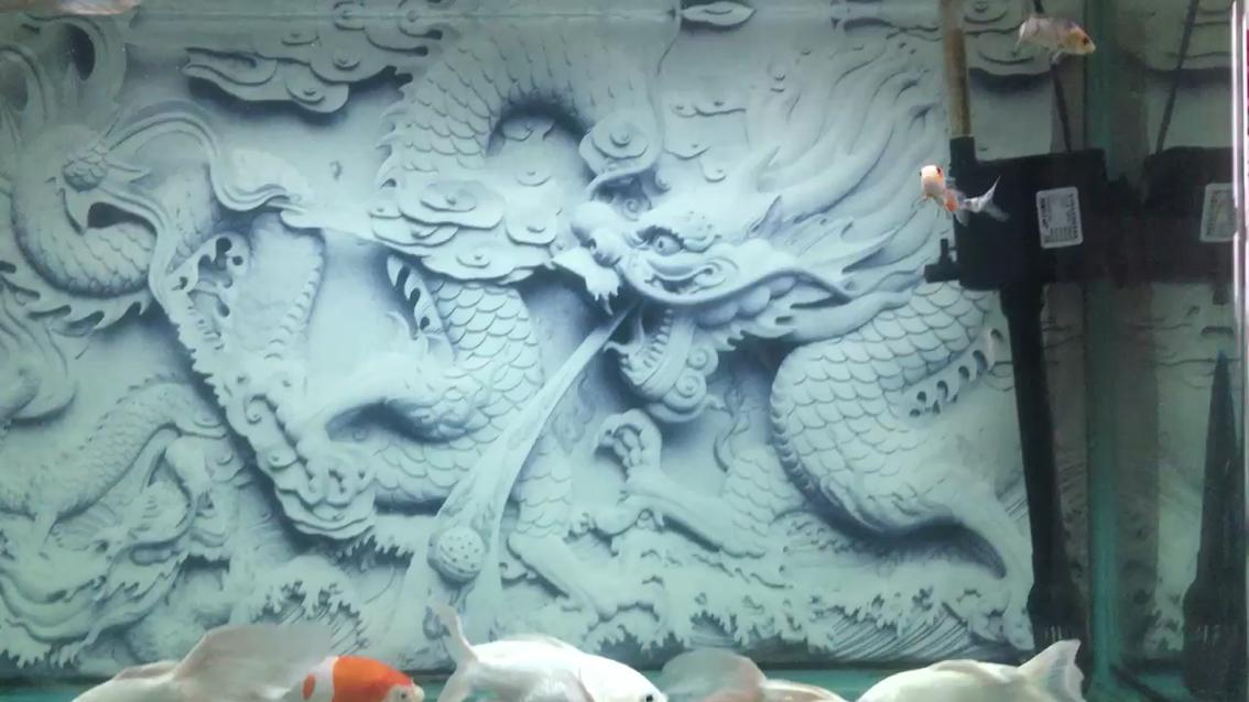 北京观赏鱼加盟店龙锦鲤锦鲤 北京龙鱼论坛 北京龙鱼第1张