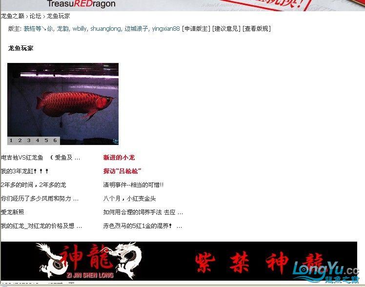 求救 我访问龙颠网站怎么会变这样了 北京龙鱼论坛 北京龙鱼第5张