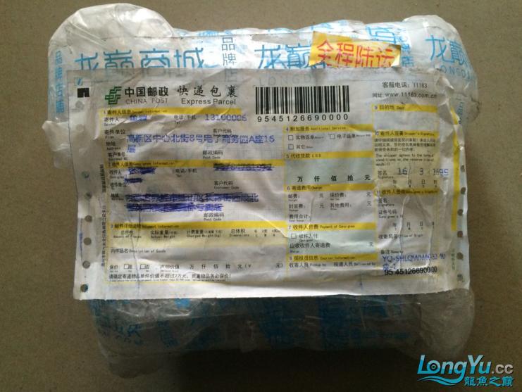 龙北京水族论坛打不开巅积分换的生化球收到了 北京观赏鱼 北京龙鱼第1张
