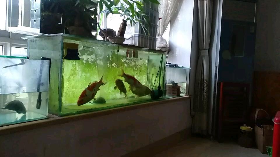 失去伙伴北京花鸟市场显得惆怅寂寞 北京龙鱼论坛 北京龙鱼第1张