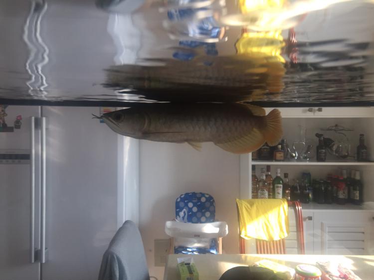 北京罗汉鱼饲料哪种好求大神给看看这是什么品种 北京龙鱼论坛 北京龙鱼第2张