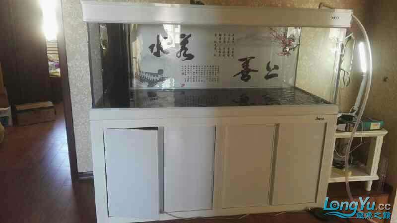 清缸泡缸完毕困水 北京龙鱼论坛 北京龙鱼第2张