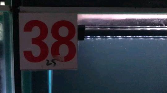 北京直纹飞凤鱼哪个店的最求鉴定 这条怎么样 价格大概多少合适 北京观赏鱼 北京龙鱼第1张