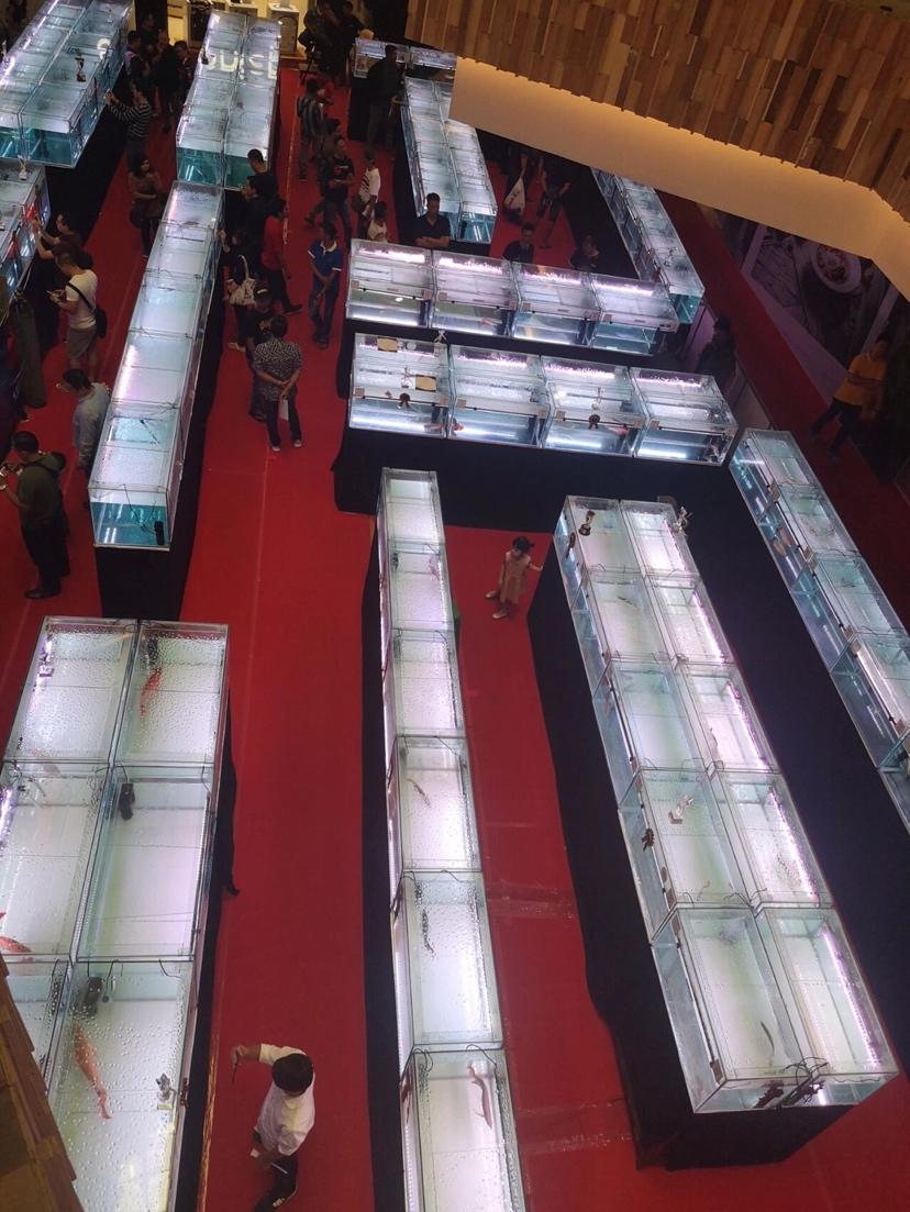 北京鱼缸定制时报利丰国际受邀参与2019年印尼泗 北京龙鱼论坛 北京龙鱼第5张
