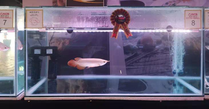 北京鱼缸定制时报利丰国际受邀参与2019年印尼泗 北京龙鱼论坛 北京龙鱼第6张
