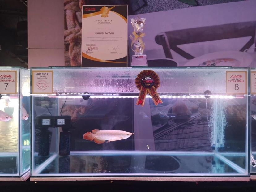 北京鱼缸定制时报利丰国际受邀参与2019年印尼泗 北京龙鱼论坛 北京龙鱼第12张