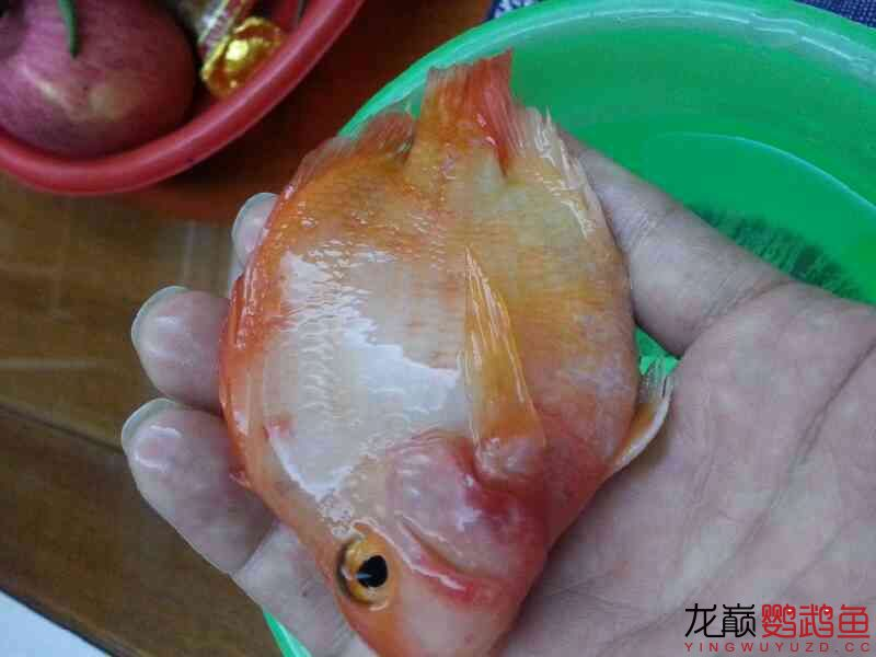 十万火急求大神 北京观赏鱼 北京龙鱼第3张