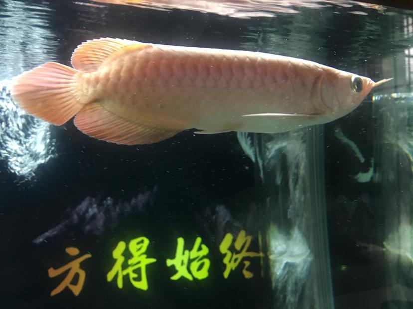 北京水族批发市场来来来都来评论一下 北京龙鱼论坛 北京龙鱼第2张