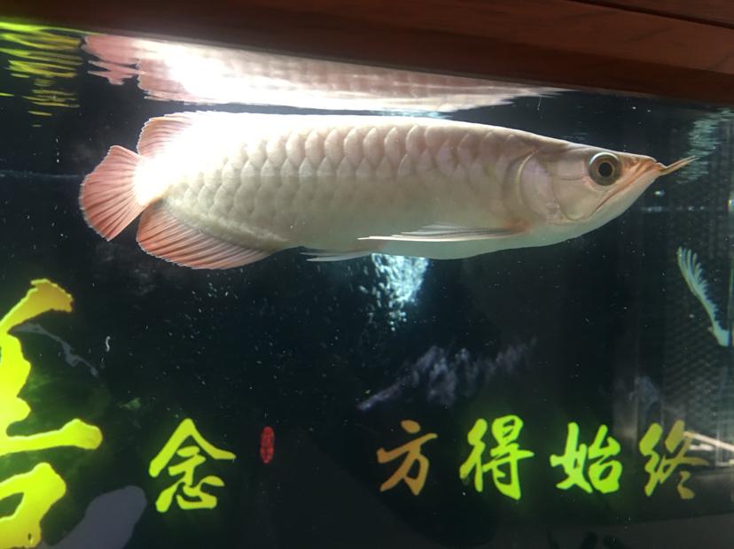 北京水族批发市场来来来都来评论一下 北京龙鱼论坛 北京龙鱼第6张
