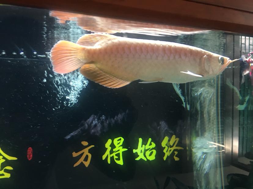北京水族批发市场来来来都来评论一下 北京龙鱼论坛 北京龙鱼第5张
