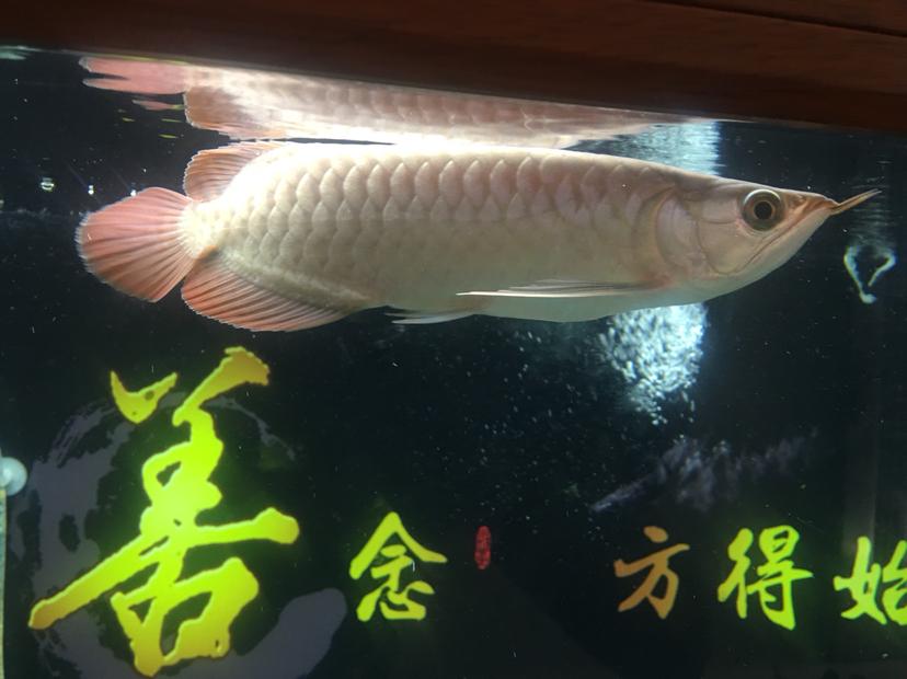北京水族批发市场来来来都来评论一下 北京龙鱼论坛 北京龙鱼第7张