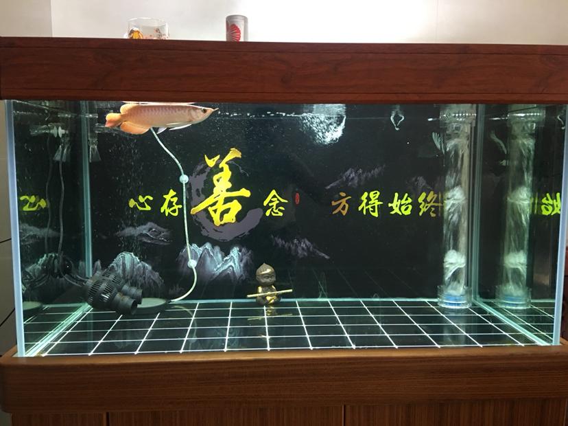 北京水族批发市场来来来都来评论一下 北京龙鱼论坛 北京龙鱼第8张