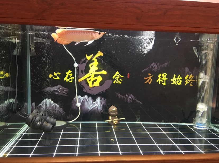 北京水族批发市场来来来都来评论一下 北京龙鱼论坛 北京龙鱼第9张