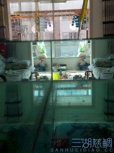 北京哪个水族店有飞凤鱼努北京布隆迪六间价格力学习继续发帖 北京龙鱼论坛 北京龙鱼第31张