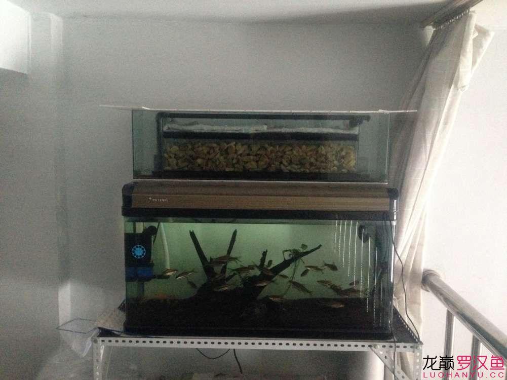 晒过滤赢滤材+自制上滤滴流 北京观赏鱼 北京龙鱼第1张