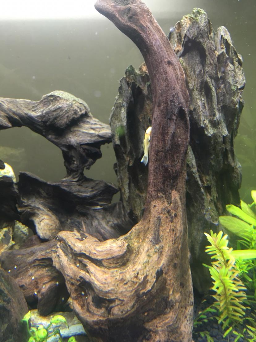 北京水族馆工程电话蓝眼胡子广西鱼友圈 北京观赏鱼 北京龙鱼第4张