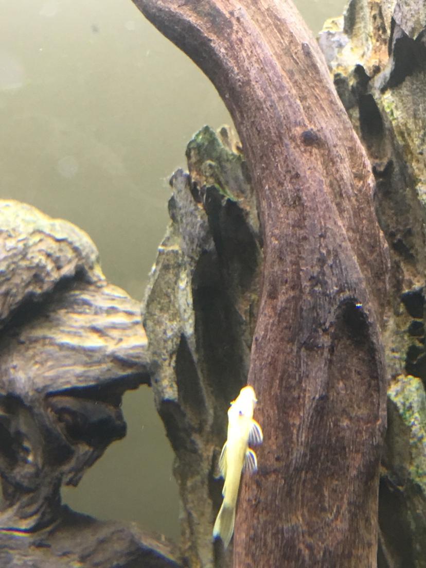 北京水族馆工程电话蓝眼胡子广西鱼友圈 北京观赏鱼 北京龙鱼第5张