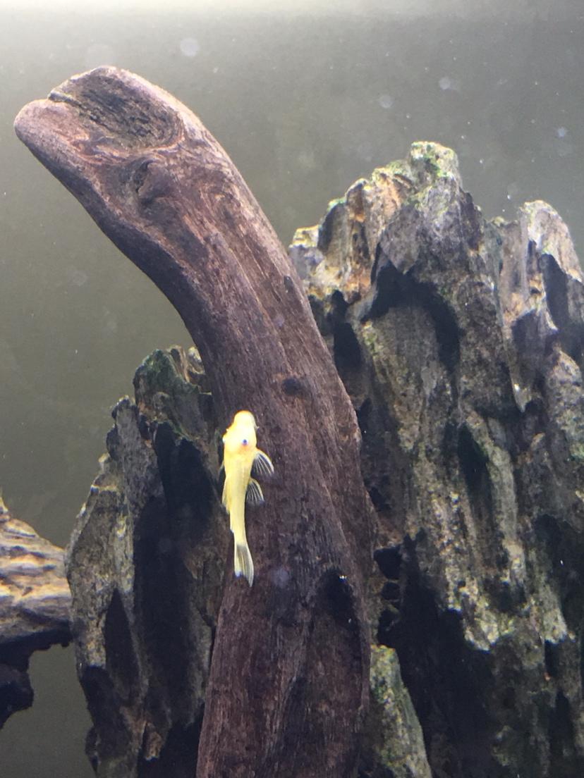 北京水族馆工程电话蓝眼胡子广西鱼友圈 北京观赏鱼 北京龙鱼第6张