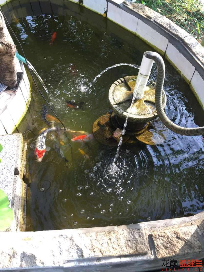 请问大神们北京花鸟鱼虫市场电话这水颜色正常吗?这几天绿苔疯长水变绿了 北京观赏鱼 北京龙鱼第1张
