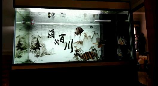 两条缸霸龙鱼龙巅 北京观赏鱼 北京龙鱼第1张