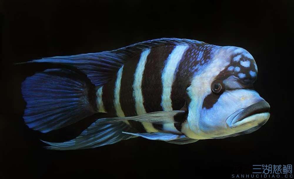 你想要的三湖 北京观赏鱼 北京龙鱼第2张