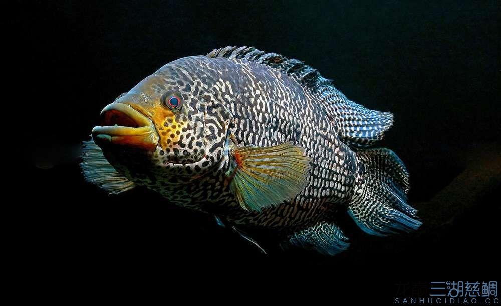 你想要的三湖 北京观赏鱼 北京龙鱼第5张