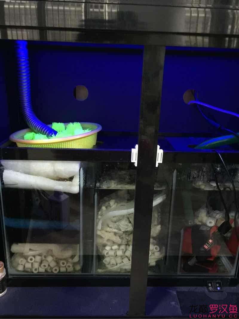 晒过滤赢滤材 养水才是最重要的 北京龙鱼论坛 北京龙鱼第1张