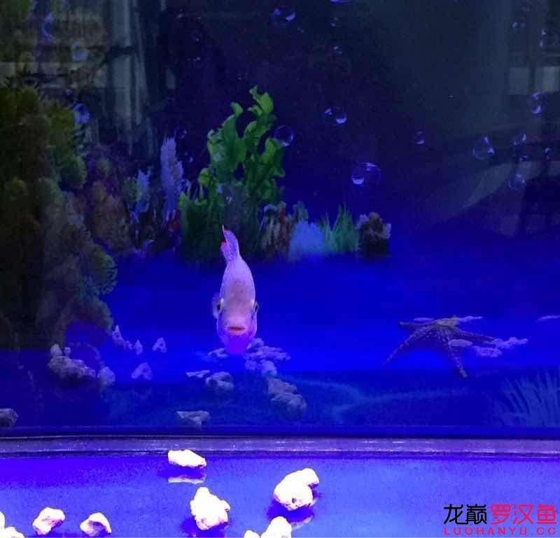 晒过滤赢滤材 养水才是最重要的 北京龙鱼论坛 北京龙鱼第2张
