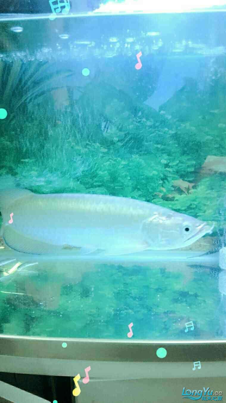 请问这鱼是不是高背的 北京龙鱼论坛 北京龙鱼第1张