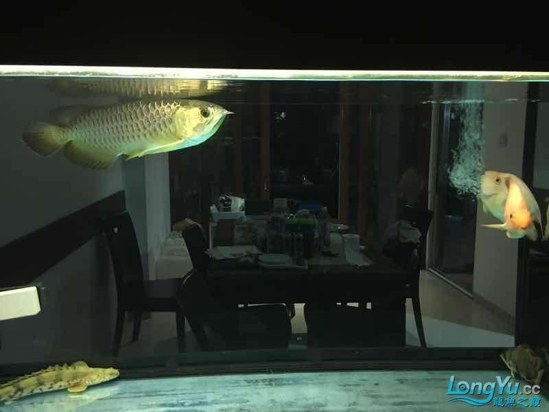 北京皇冠黑白魟鱼视频请问是不是水质问题呢?鱼儿都不喜欢动了 北京龙鱼论坛 北京龙鱼第1张