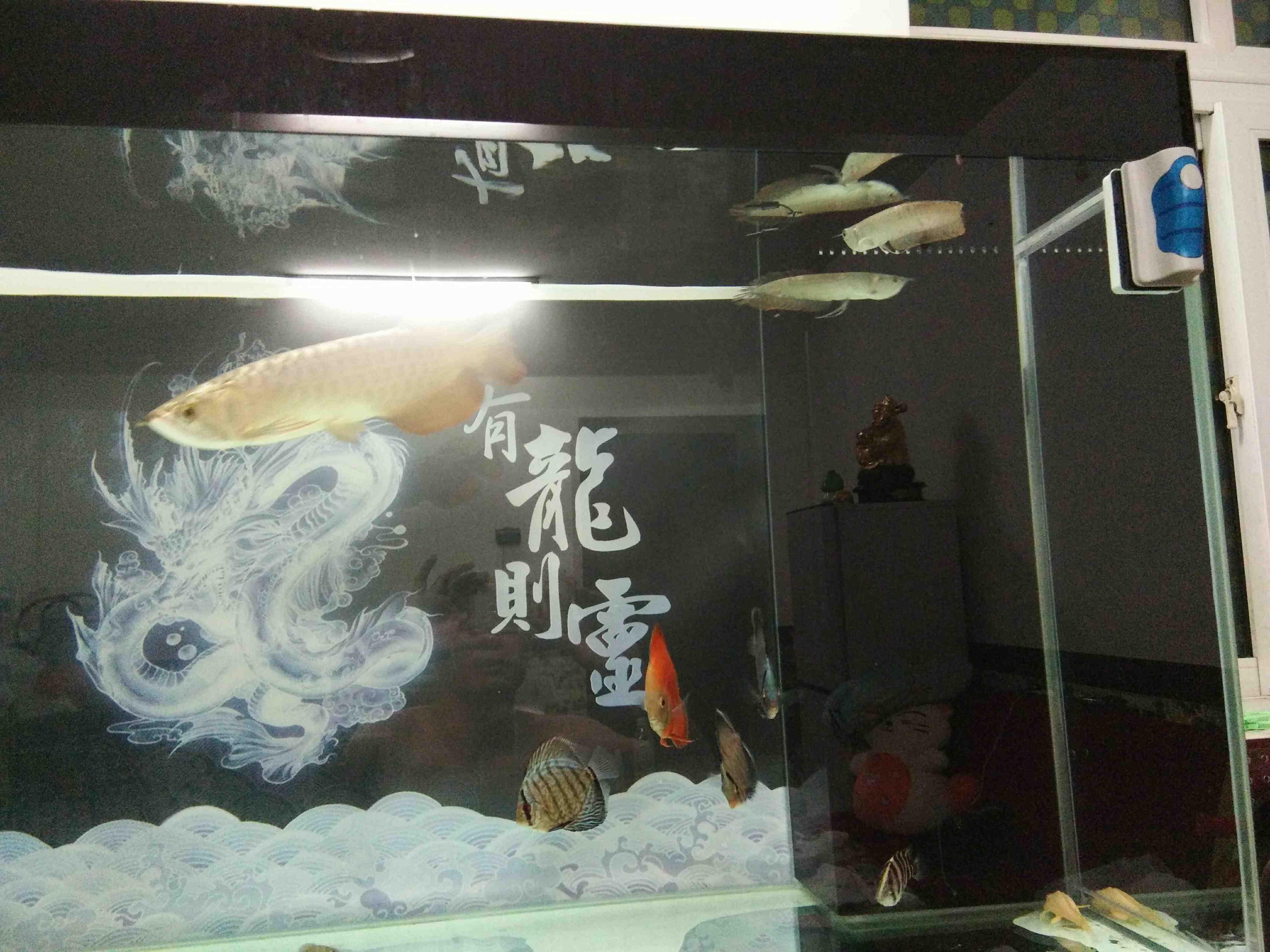 沙包进缸 北京龙鱼论坛 北京龙鱼第5张