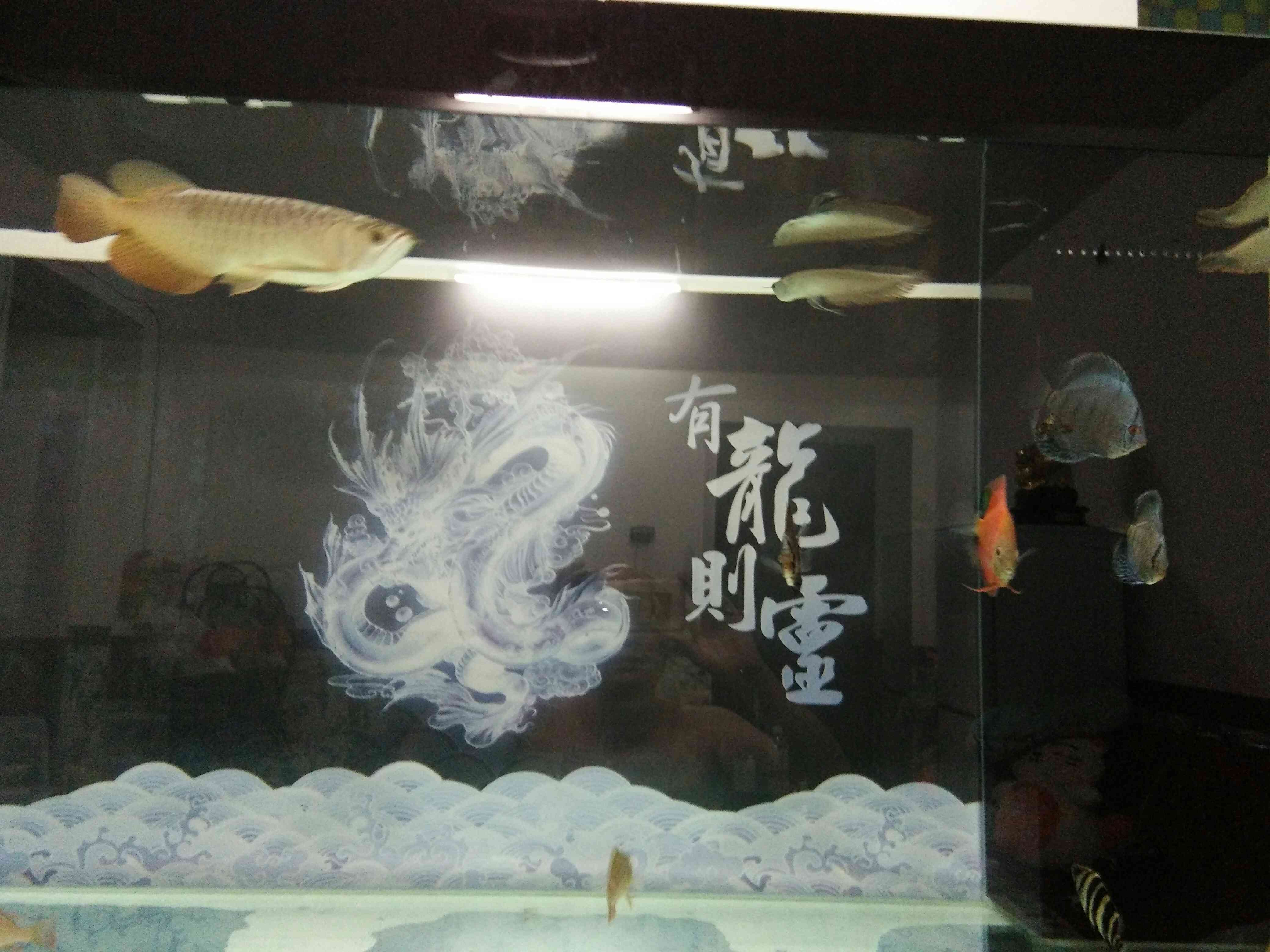 沙包进缸 北京龙鱼论坛 北京龙鱼第8张