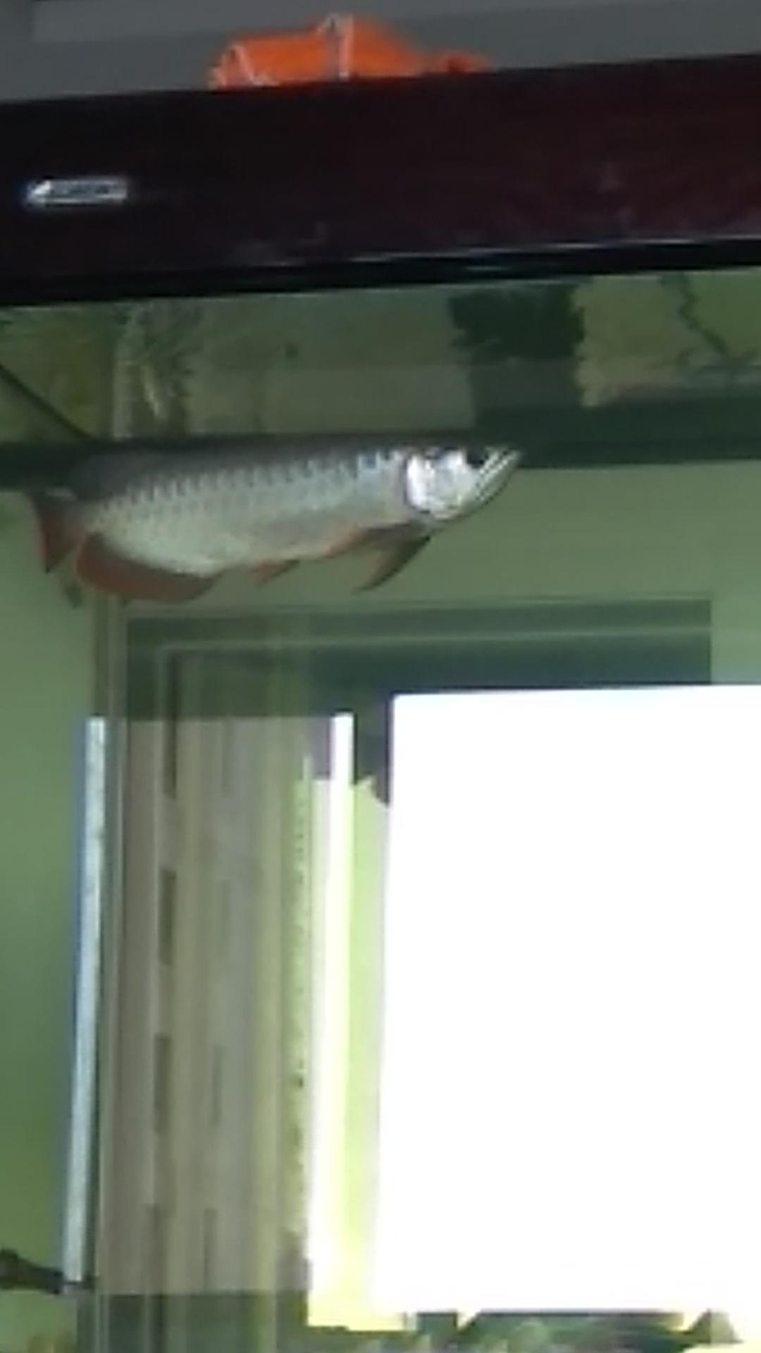 申请 光特亿智能wifi水泵6000一台 北京观赏鱼 北京龙鱼第1张