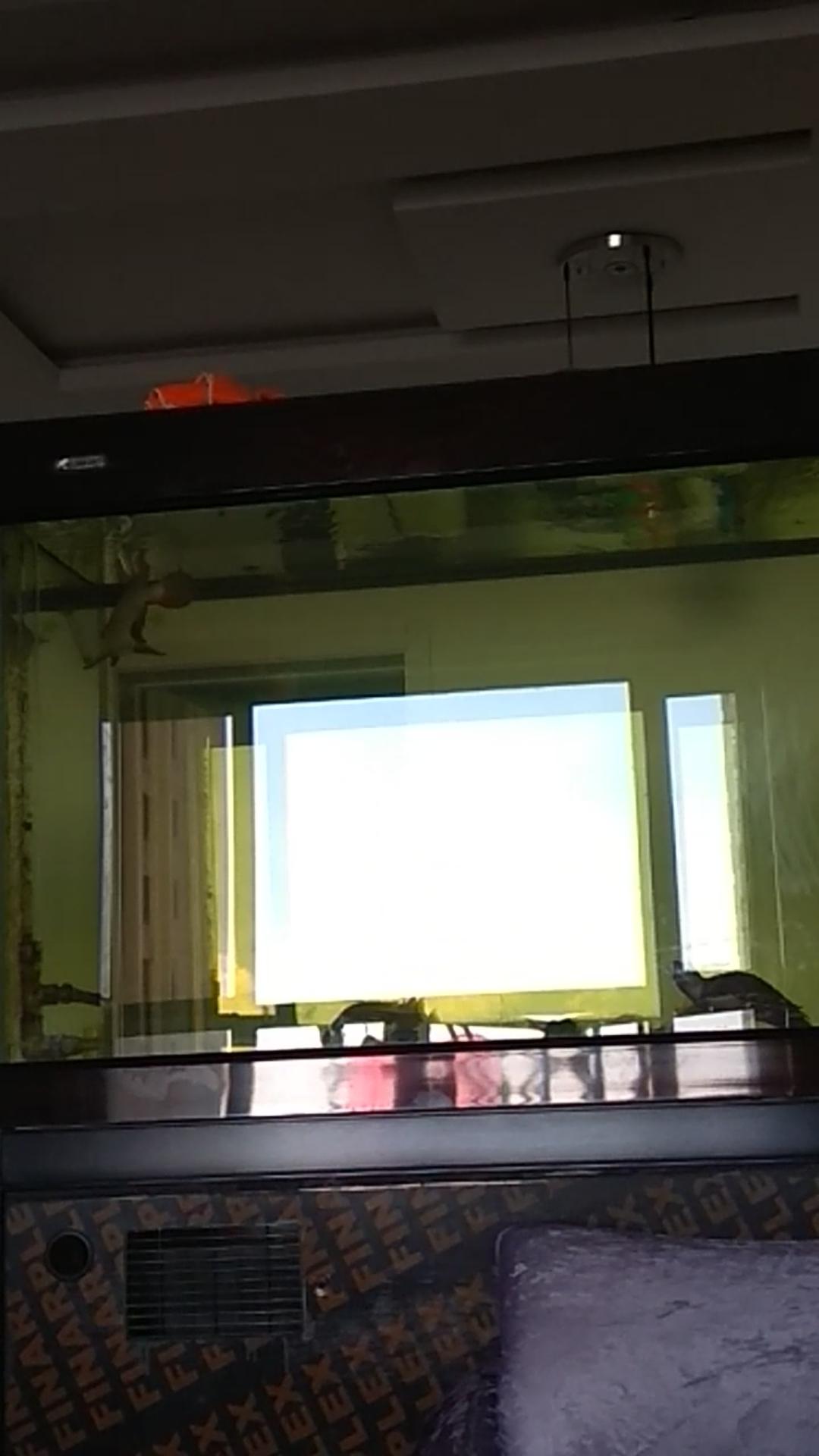 申请 光特亿智能wifi水泵6000一台 北京观赏鱼 北京龙鱼第2张