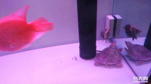 请教各位,鱼缸外面水印如何彻底去除 北京龙鱼论坛