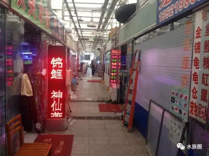 北京水族家园发帖问问题幻彩小苗子应该是什么颜色? 北京龙鱼论坛