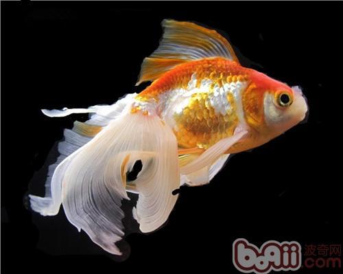 分享~ 北京观赏鱼