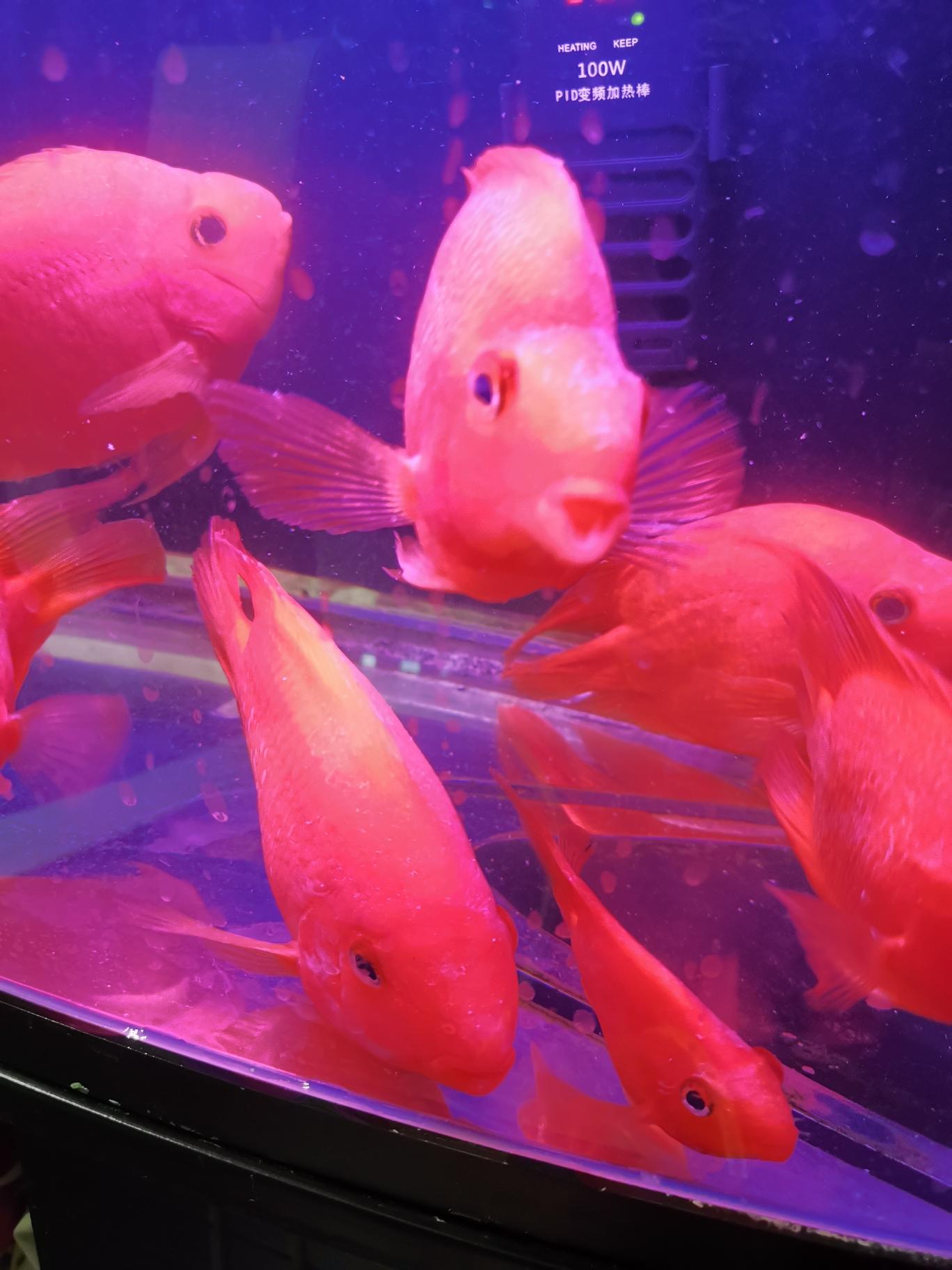 求教高手 不知道什么怪病 北京观赏鱼 北京龙鱼第2张