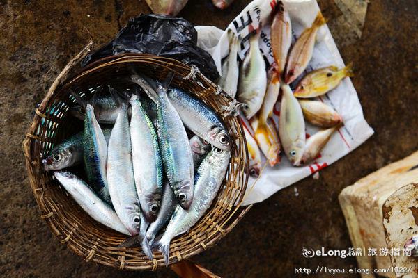 每周记录小鱼的成长 北京观赏鱼 北京龙鱼第2张