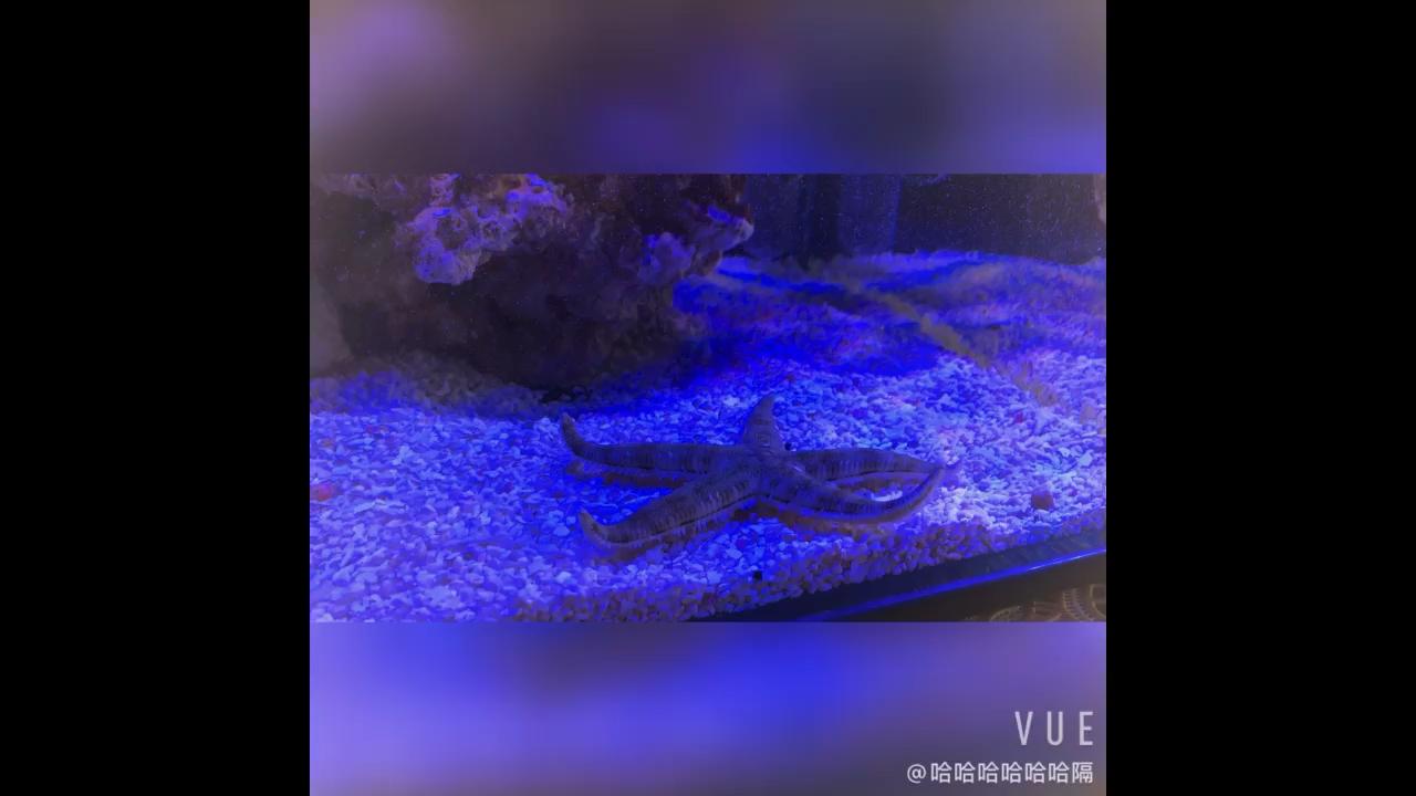 翻砂海星到底喂什么嘛 北京龙鱼论坛 北京龙鱼第1张