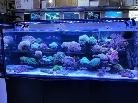 养鱼也是一种乐趣 北京龙鱼论坛 北京龙鱼第2张