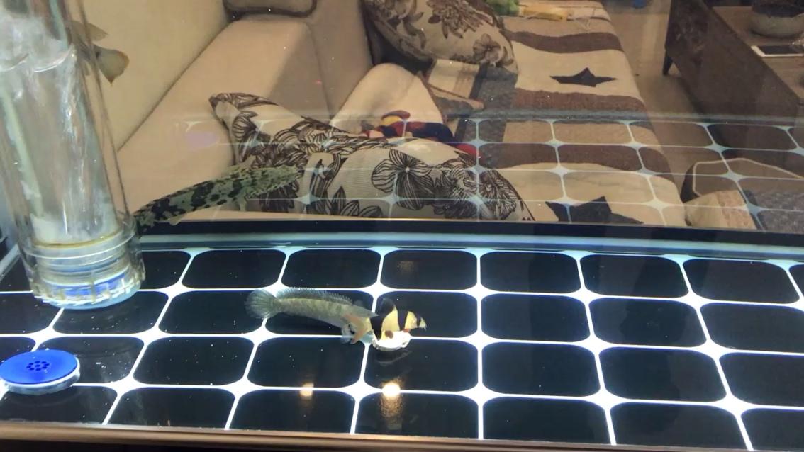 梦见养的龙鱼死了 北京观赏鱼 北京龙鱼第1张