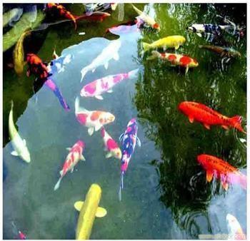 厦门哪里有卖龙鱼的? 北京龙鱼论坛