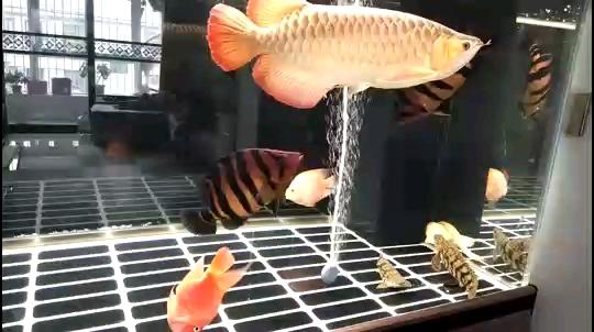 新手养鱼不用怕几句话帮你搞定 北京观赏鱼 北京龙鱼第1张