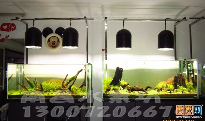 清道夫和女王大帆哪个好 北京观赏鱼