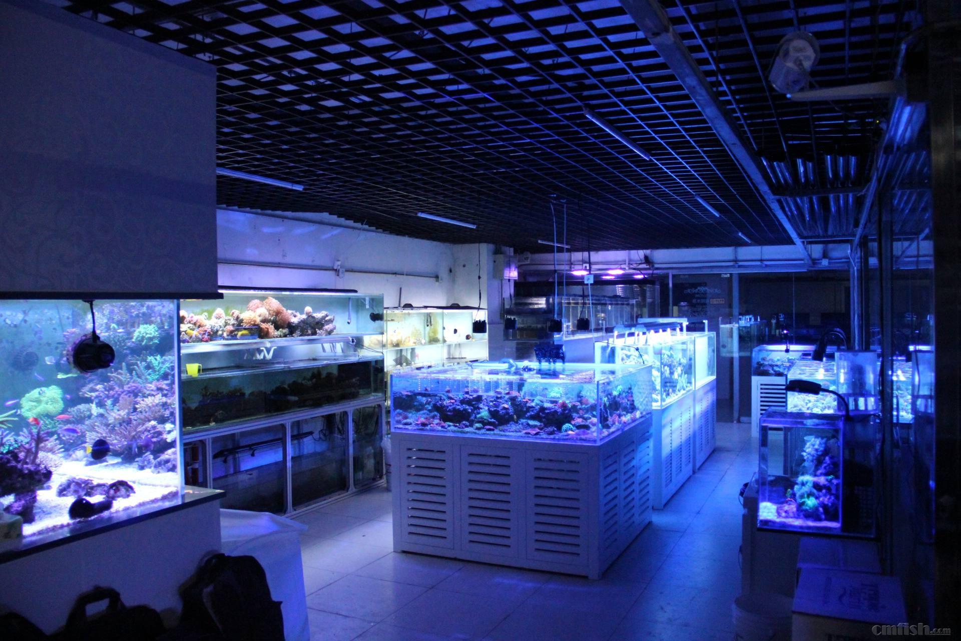 北京鱼市洛宾红龙品质如何