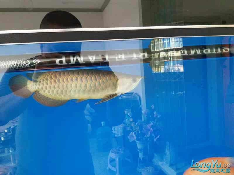 请大家各种吐槽 北京观赏鱼 北京龙鱼第1张